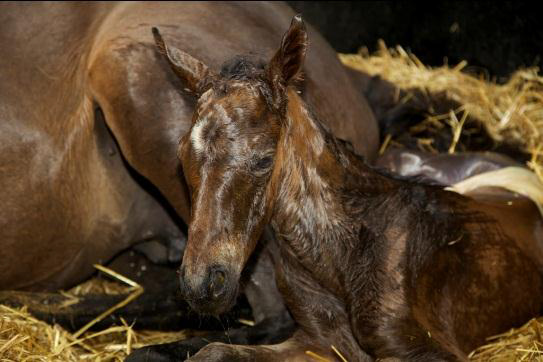 Foaling Complications